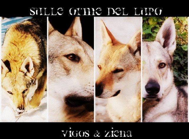 sulle orme del lupo